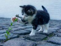 Purina Trockenfutter ist für Katzen die erste Wahl